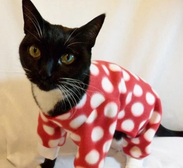 Cat In Red Spotted Pajamas