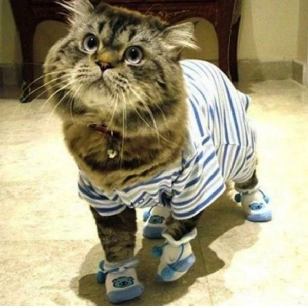 Cat In blue Pajamas and slippers