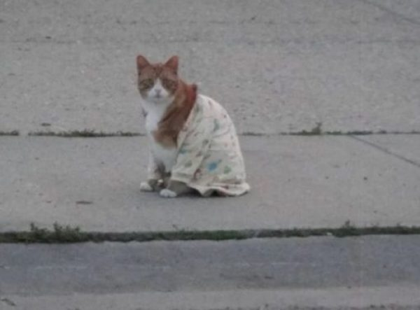 Cat In Yellow Patterned Pajamas