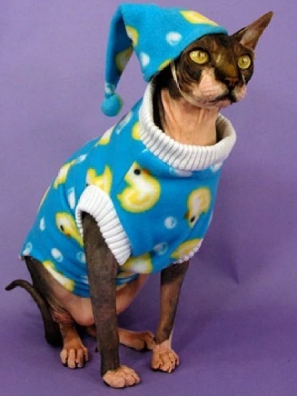 Cat In Blue and Yellow Ducks Pajamas