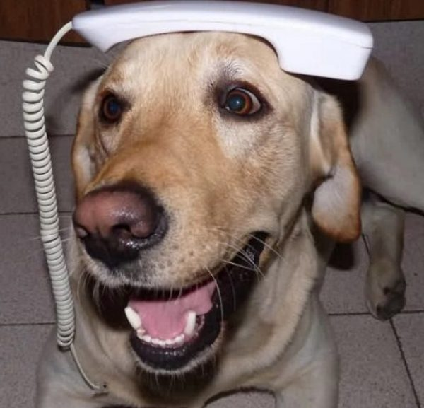 Dog using a phone