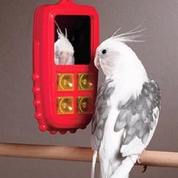 Bird using a phone
