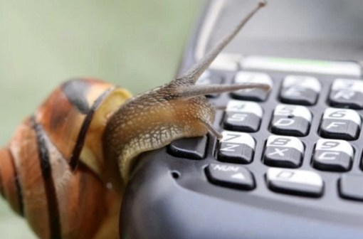 Snail using a phone