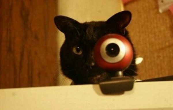 Cat With Funny Eye on a Webcam