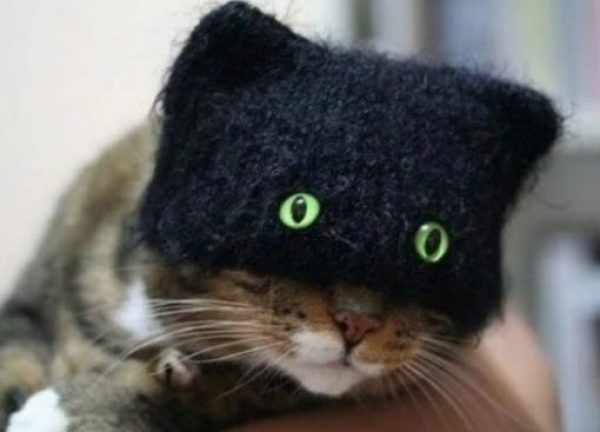 Cat With Funny Eyes on a Balaclava