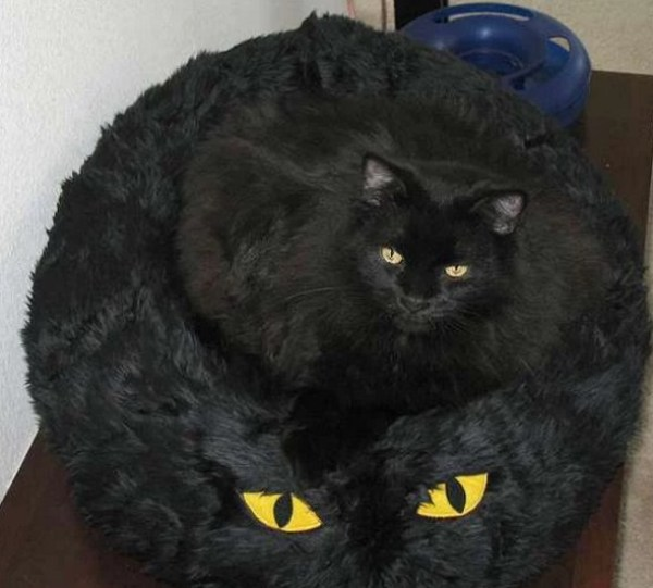 Cat With Funny Eyes on a Cat Bed
