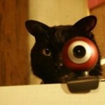Top 10 Images of Cats With Funny Eyes