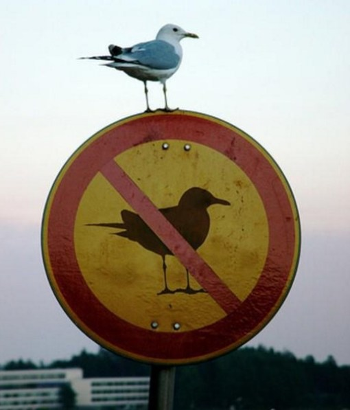 Rebellious Seagull