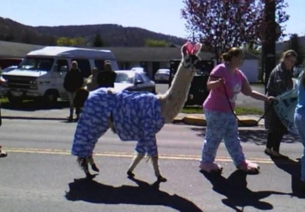 llama in pyjamas