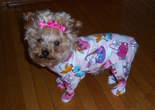 Dog in Pajamas