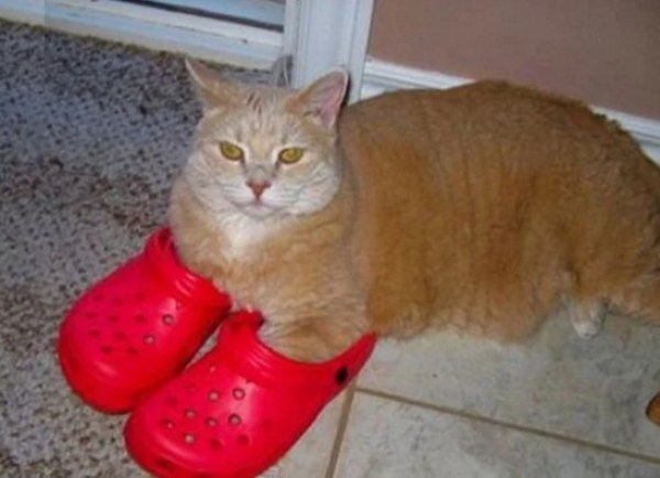 7691281e1d11b Ten Fashionable Cats Wearing Their Human Owner's Shoes