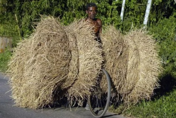 Bicycle Overloaded With Hay