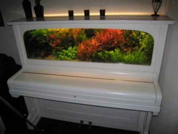 Piano Turned into aquarium