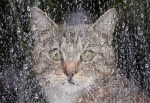 Top 10 Images of Cats Avoiding The Rain