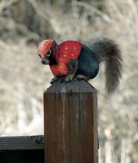 Squirrel Looks like Spider-Man