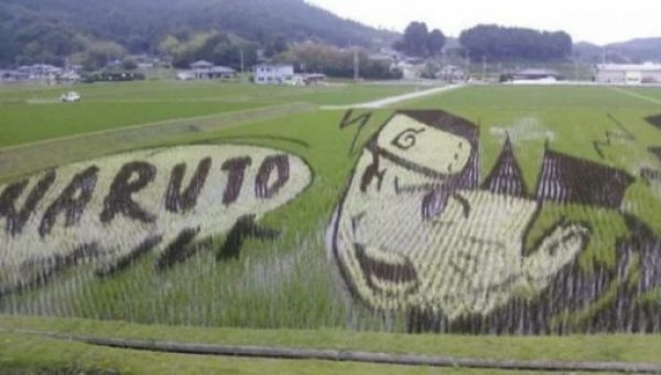 Tanbo Art Pictures in a Rice Paddy Field