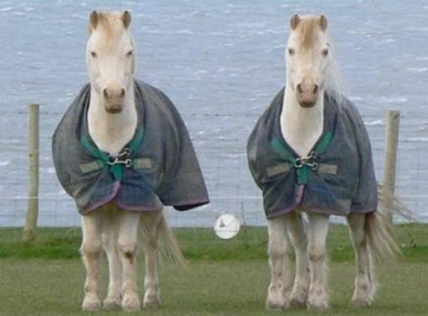 Identical Twin Horses