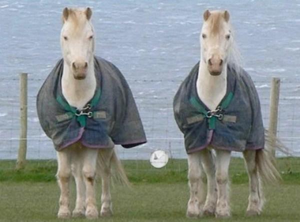 Identical Twin Horses