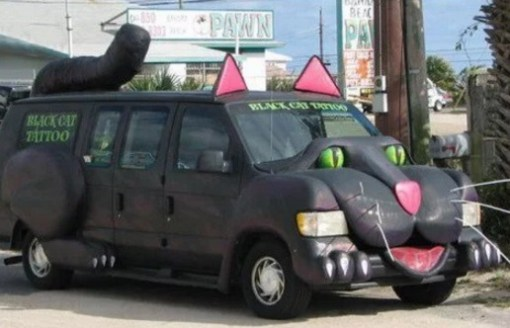 Black van cat