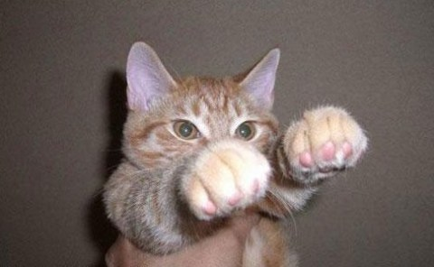 The World's Top 10 Best Images of Cats Playing With Something Invisible