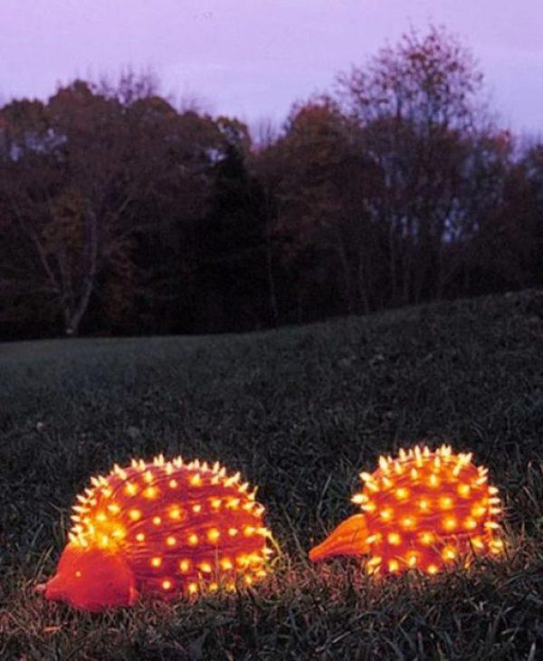 Pumpkin/Jack-o-lantern that looks a Hedgehog