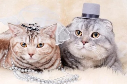 Top 10 Best Images Of Cats Getting Married-9060