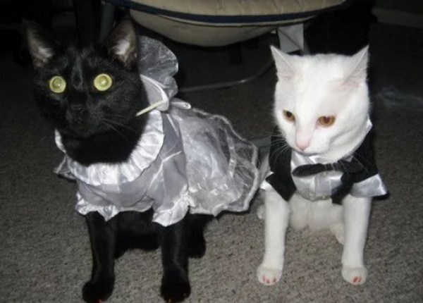 Cats Getting Married