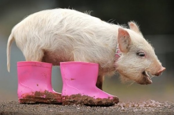 Ten Adorable and Funny Animals Wearing Wellies (Wellington Boots)