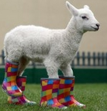 Top 10 Funny Animals Wearing Wellies (Wellington Boots)