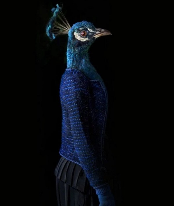 Peacock Dressed in Latest Fashion