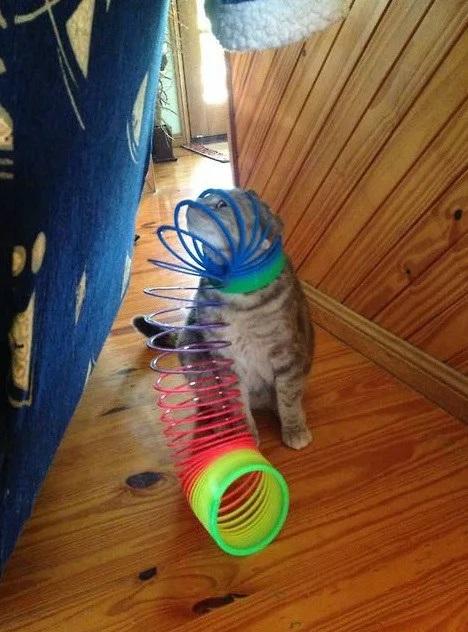 Cat stuck in a slinky