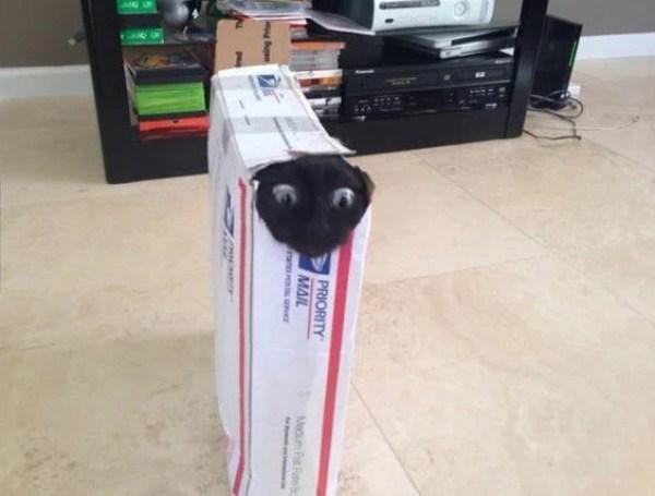 Cat stuck in a box