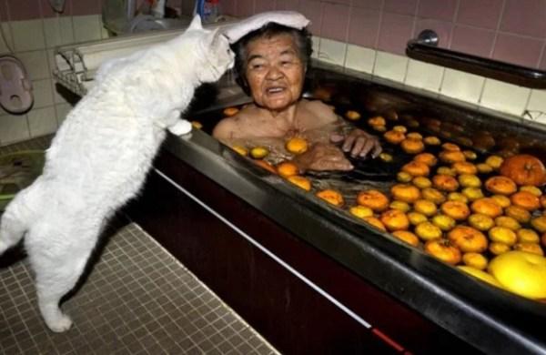 Cat Cooking