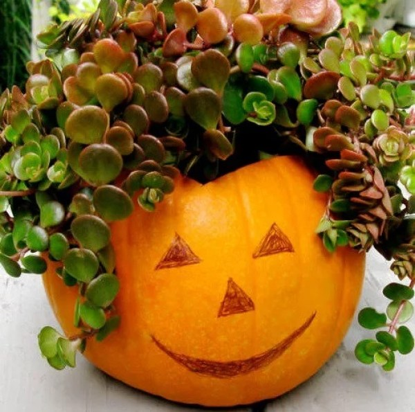 Things to do With Pumpkins After Halloween: Pumpkin Planter