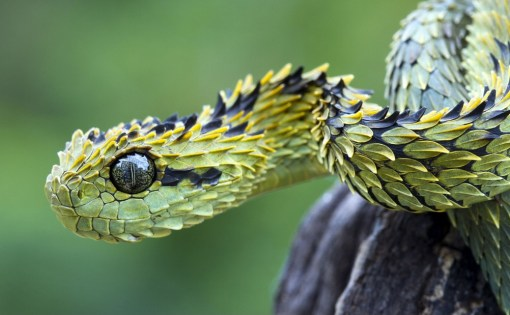Top 10 Amazing and Unusual Snakes