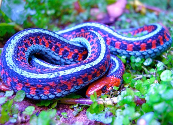 Ten of the Worlds Most Amazing and Unusual Snakes