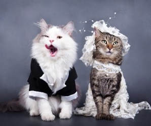 Top 10 Best Images of Cats Getting Married