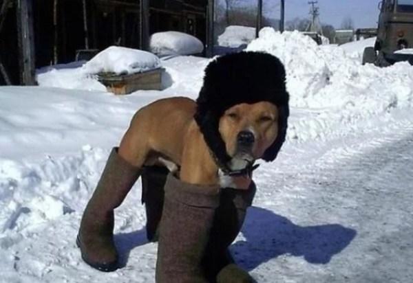 Dog wearing shoes