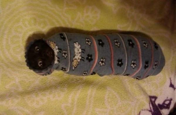 Catwearinga sock