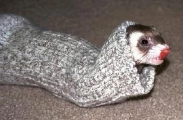 Stoatwearinga sock