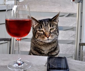 Ten Pictures of Cats Drinking Wine Because Its Wine O'Clock