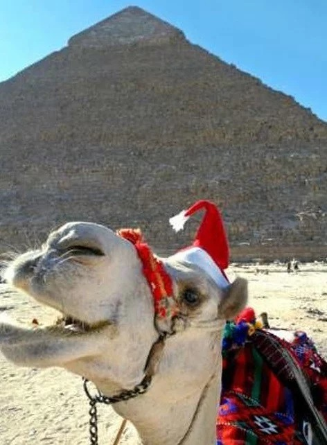 Camel in a Christmas Santa Hat