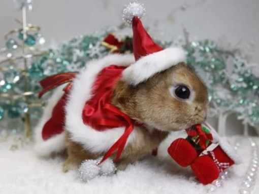 Rabbit in a Christmas Santa Hat