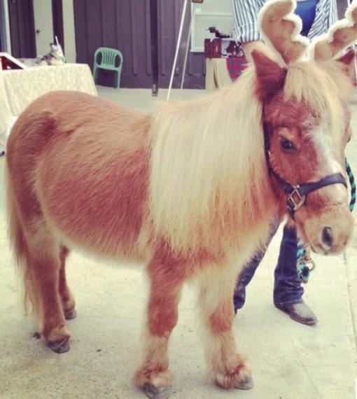 Pony Dressed as a Reindeer