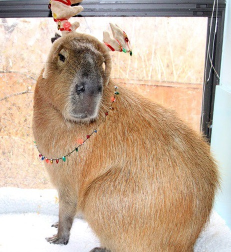 Capybara Dressed as a Reindeer