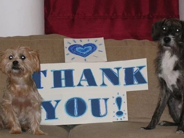 Dog Saying Thank you