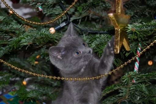 Ten Pictures of Very Naughty Cats Climbing Christmas Trees