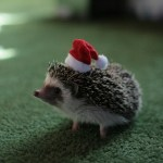 Top 10 Best Images of Animals in Santa Hats