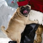 Top 10 Funny Festive Dogs in elf Costumes