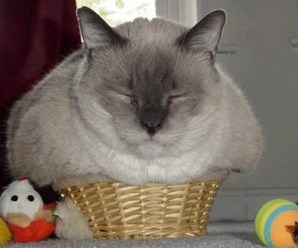 Top 10 Images of Cats That Have Overeaten